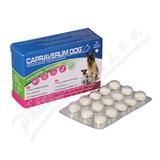 Capraverum Dog probioticum-prebioticum tbl. 30